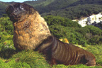 New Zealand Sea Lion Image